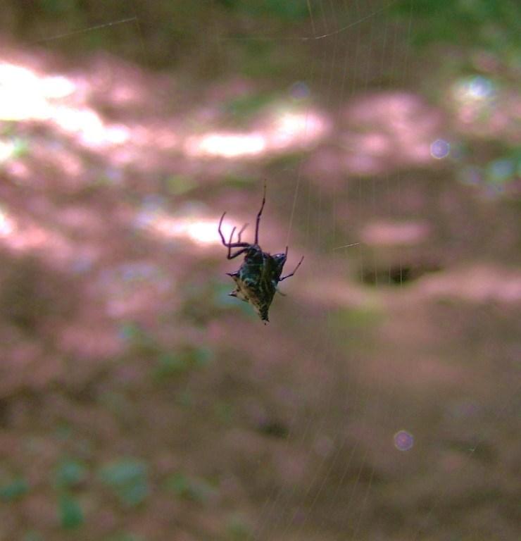 Bugs & Birds 08