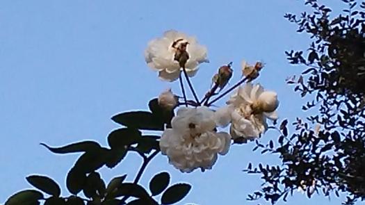 white-flowers-florida